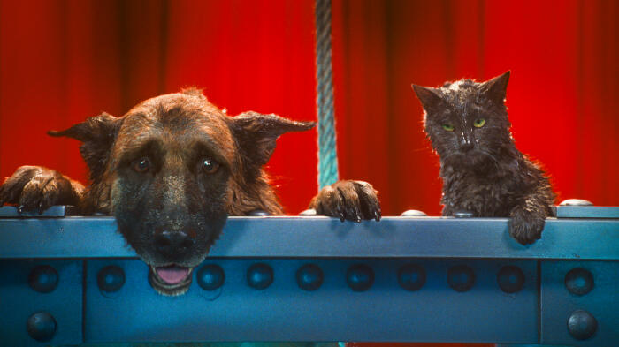 Cats & Dogs - Die Rache der Kitty Kahlohr