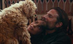 A Star Is Born mit Bradley Cooper und Lady Gaga - Bild 5