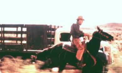 All die schönen Pferde - Bild 6