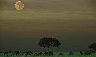 Serengeti - Bild 11