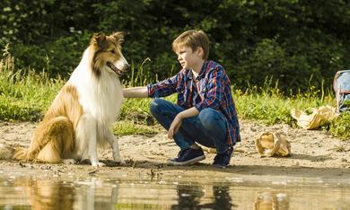 Lassie - Eine abenteuerliche Reise mit Nico Marischka - Bild 8