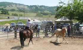 Buck - Der wahre Pferdeflüsterer - Bild 5