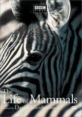 Das Leben der Säugetiere - Poster