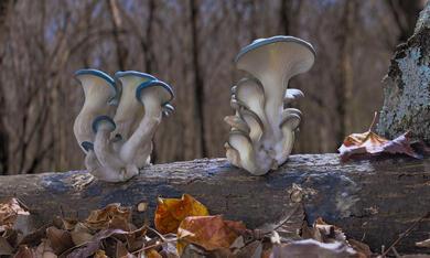 Fantastische Pilze - Die magische Welt zu unseren Füssen  - Bild 2