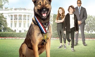 Max 2 - Ein Hund für alle Fälle - Bild 10