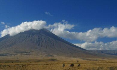 Serengeti - Bild 4