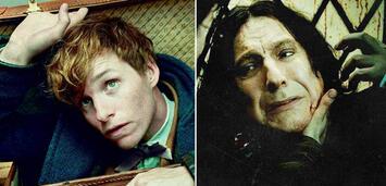 Bild zu:  Newt in Phantastische Tierwesen / Snape in Harry Potter 7.2