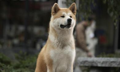 Hachiko - Eine wunderbare Freundschaft - Bild 1