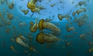 Unsere Ozeane - Bild 1