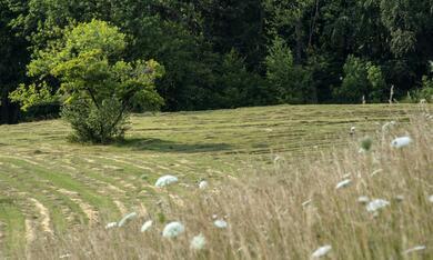 Die Wiese - Ein Paradies nebenan - Bild 2