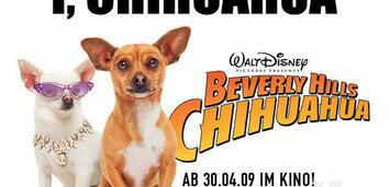 Bild zu:  Das Chihuahua-Videoquiz!