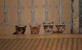Kedi - Von Katzen und Menschen - Bild 9