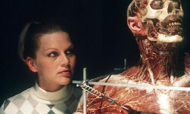 Anatomie - Bild 5
