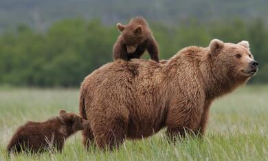 Bären - Bild 8