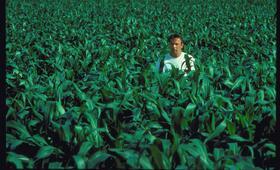 Feld der Träume mit Kevin Costner - Bild 109