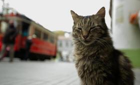 Kedi - Von Katzen und Menschen - Bild 8