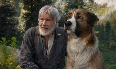 Ruf der Wildnis mit Harrison Ford - Bild 9