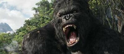 Welcher Regisseur dreht den neuen King-Kong-Film?