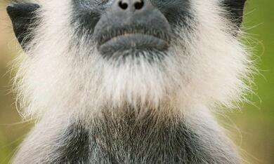 Im Reich der Affen - Bild 2