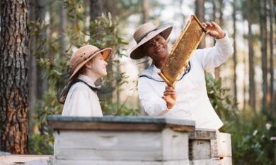 Die Bienenhüterin - Bild 9