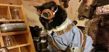 Bild zu:  Fallout-Katzen existieren!