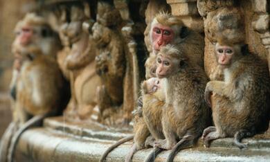 Im Reich der Affen - Bild 10