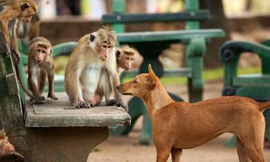 Im Reich der Affen - Bild 12