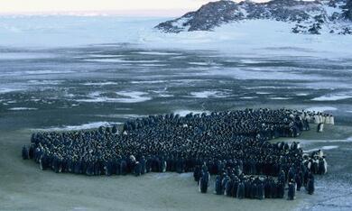 Die Reise der Pinguine - Bild 11