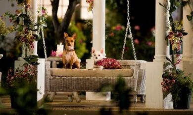 Beverly Hills Chihuahua - Bild 11