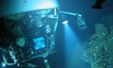 Aliens der Meere - Bild 8