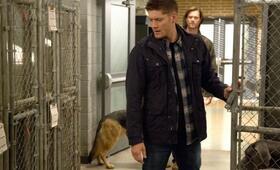 Staffel 9 mit Jensen Ackles - Bild 28