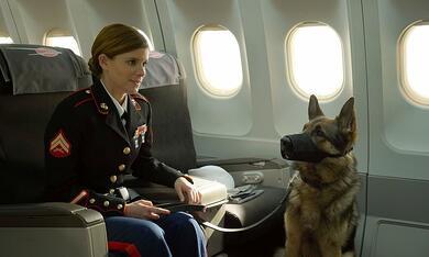 Sergeant Rex - Nicht ohne meinen Hund mit Kate Mara - Bild 4