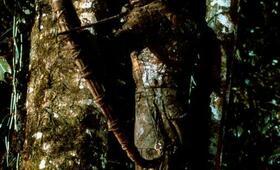 Predator - Bild 22