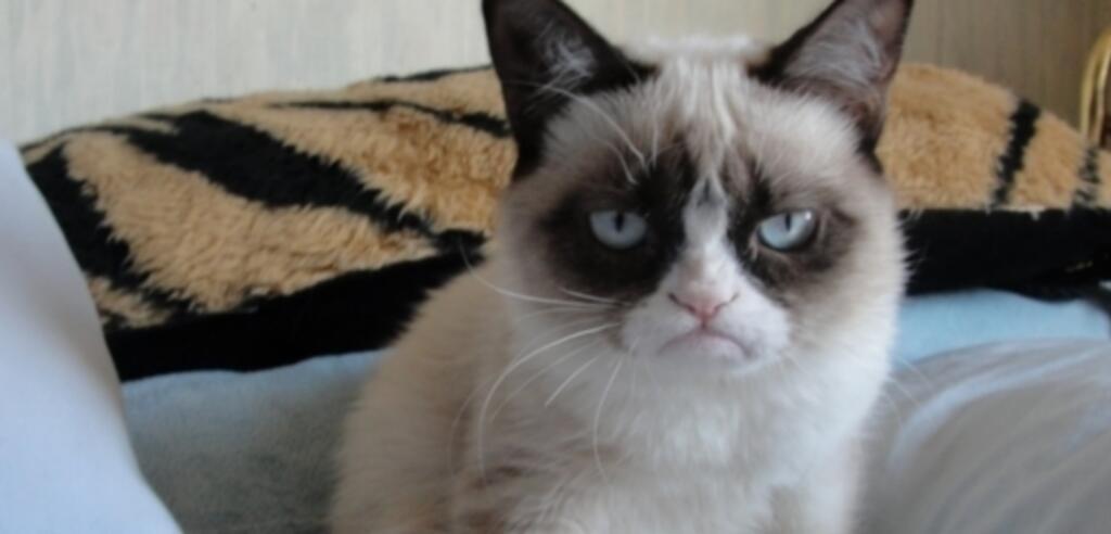 Die beliebteste Katze des World Wide Web bekommt einen eigenen Film