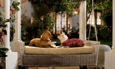 Beverly Hills Chihuahua - Bild 12