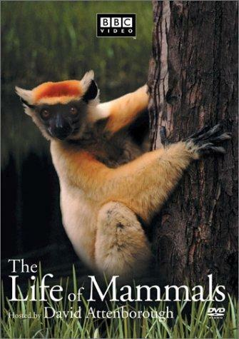 Das Leben der Säugetiere