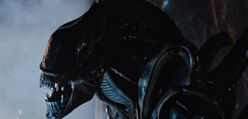 Bild zu:  Das Alien aus dem gleichnamigen Film