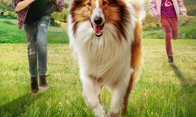 Lassie - Eine abenteuerliche Reise - Bild 12