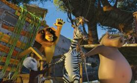 Madagascar 2 - Bild 10