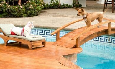Beverly Hills Chihuahua - Bild 3