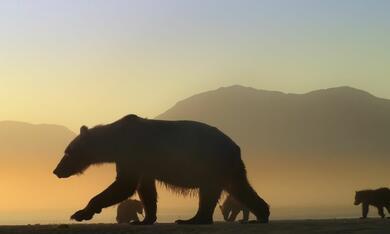 Der Bär in mir - Bild 1