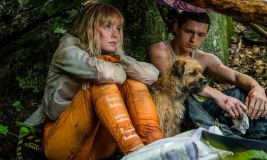 Chaos Walking mit Daisy Ridley und Tom Holland - Bild 2