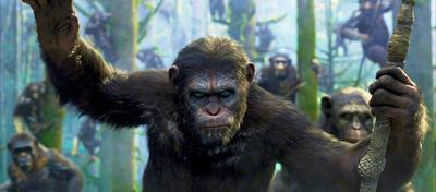 Steht jetzt im Mittelpunkt: Caesar in Planet der Affen - Revolution.