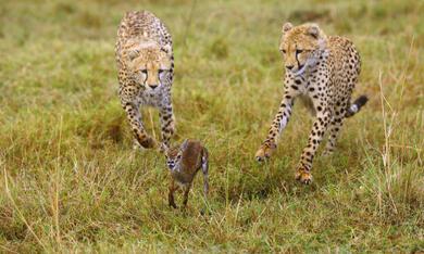 Serengeti - Bild 10