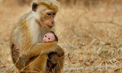 Im Reich der Affen - Bild 6