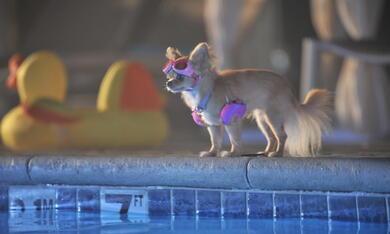 Beverly Hills Chihuahua 3 - Bild 9