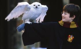 Harry Potter und der Stein der Weisen mit Daniel Radcliffe - Bild 5